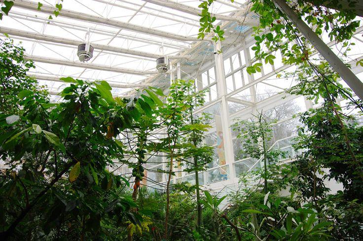 世界最古の植物園『パドヴァの植物園(オルト・ボタニコ)』| イタリアの世界遺産