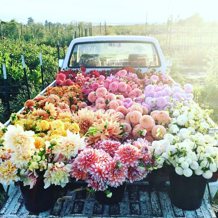 If I Could Be A Flower Grower. Talk About Serious Flower Dreams! Each Photo  Makes My Heart Flutter