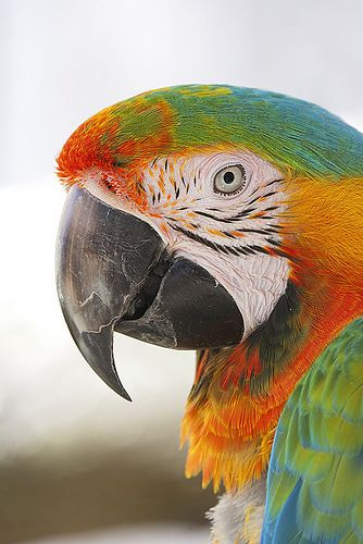 Isn't this macaw just stunning?!?!?