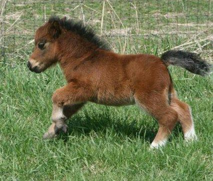 A Miniature Horse ~ This Cute Little Fella must be the smallest Horse on The Planet?!