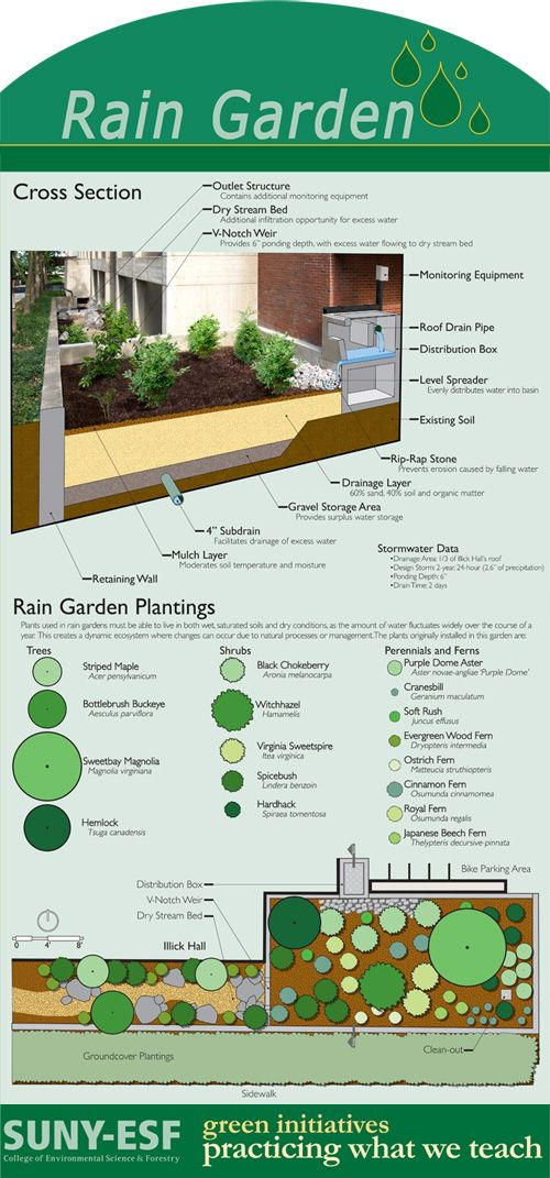 Photos of Rain Gardens | rain garden