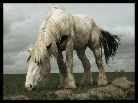 Shirehorse. From my photoblog Kozerawski.com