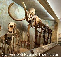 University of Nebraska State Museum, Morrill Hall...Totally awesome. They even have the world's largest exhibited mammoth skeleton (it was even found in Nebraska)!