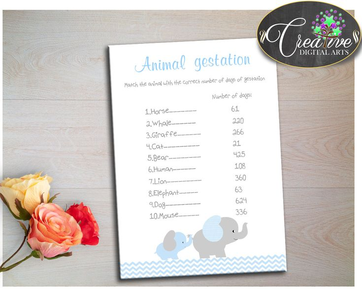 Baby Shower Elephant ANIMAL GESTATION game with chevron blue and gray elephant theme, digital files pdf jpg, instant download - ebl02 #babyshowergames #babyshowerdecorations
