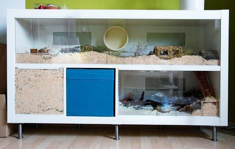 Natural hamster cage: 2x4 IKEA Expedit as Roboheim