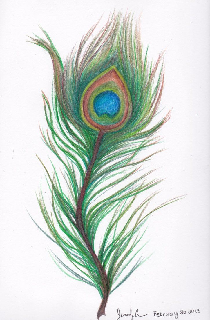 Peacock feather drawing tattoo - photo#37