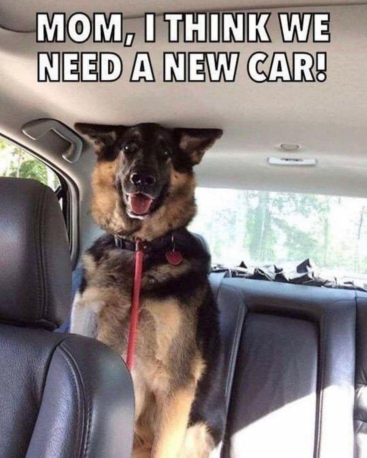 Mom, I think we need a new car! Funny dog memes, Dog