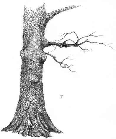 how to draw an oak tree, pen and ink tree, landscape in ink, ink demo