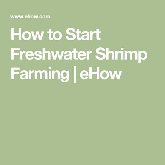 How to Start Freshwater Shrimp Farming | eHow