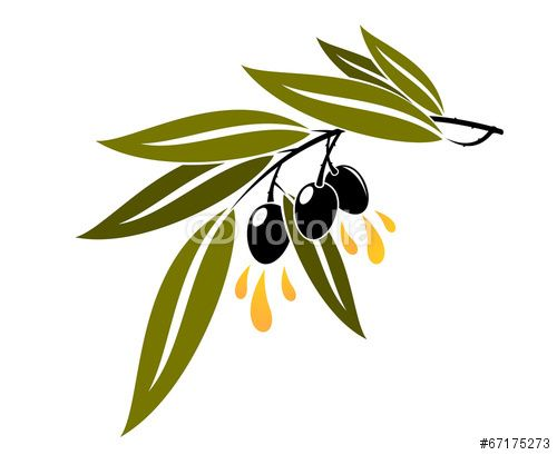 Вектор: Black olives on a branch dripping olive oil