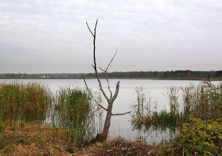 """Rezerwat przyrody """"Stawinoga"""" położony jest blisko koryta Narwi we wsi Stawinoga na płd.-zach. skraju gm. Zatory w pow. pułtuskim na zach. skraju Puszczy Białej. Utworzony na podstawie zarządzenia..."""