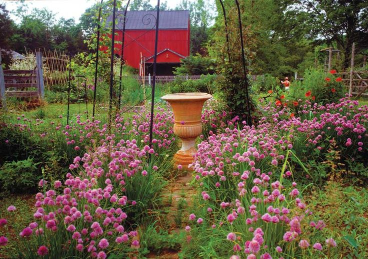 36 best low maintenance gardening images on pinterest for Easy to maintain flowers and plants
