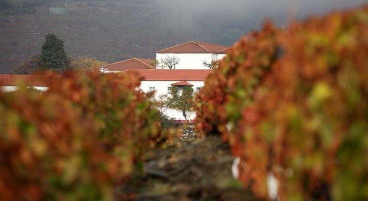 Quinta Nova de Nossa Senhora do Carmo - Uma magnífica varanda sobre o Douro, onde estamos rodeados por aquilo que a região tem de melhor: vinhas e vinhos