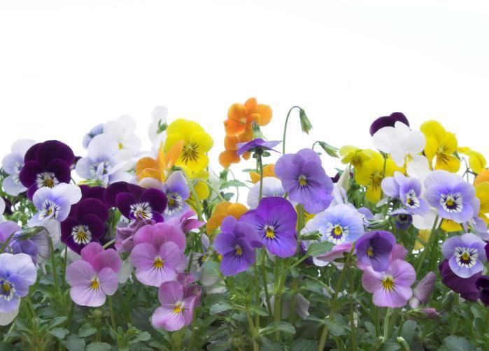 Decora tu hogar con estas 9 coloridas flores que crecen en for Home disena y decora tu hogar