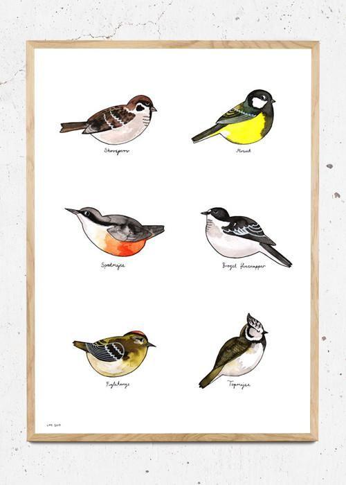 Forskellige danske fugle fra have og skov. Finurligt håndtegnet og malet med flydende tusch og derefter trykt som plakat. Trykt på 300g genbrugspapir.