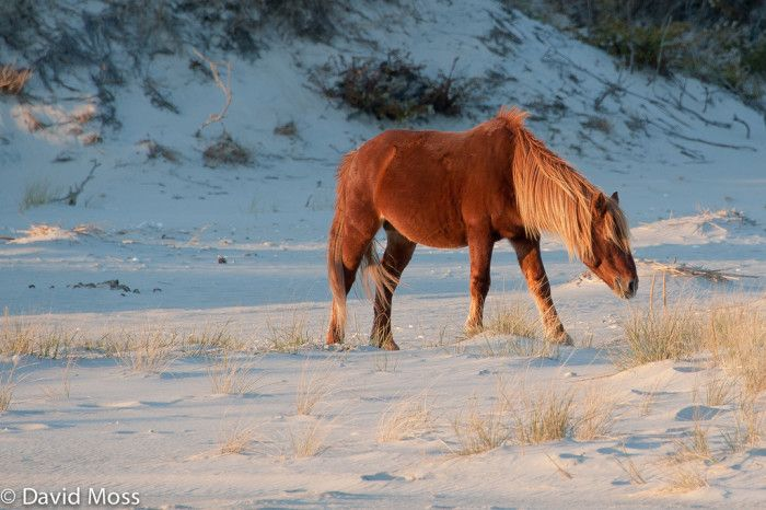 Assateague and Chincoteague Islands named among 14 Little Known Places in Virginia Where Animal Lovers Should go.