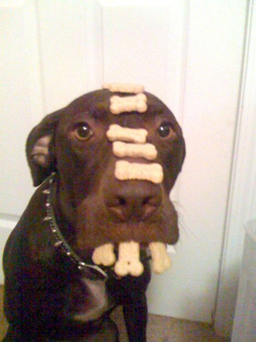 Most obedient dog EVER!