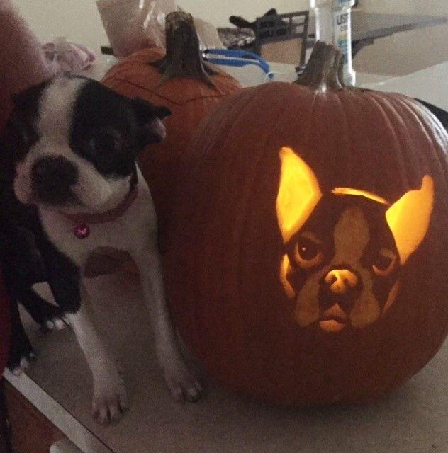 Happy Halloween - Boston Terrier Pumpkin                                                                                                                                                                                 More