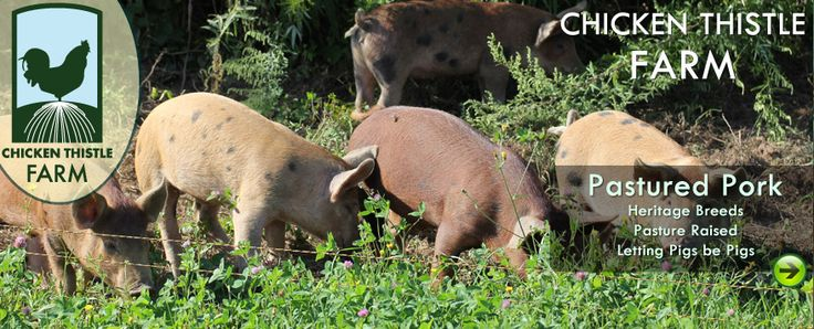 What does it cost to raisepigs? - Farm Blog - Chicken Thistle Farm