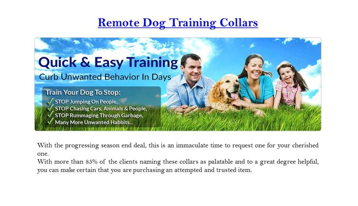 Offered by Alpha Dog collars, these dog training collars can help your dog in a number of ways. Behaviors such as jumping on people, chasing cars and other people, rummaging through the garbage and much more can be easily curbed with the help of these remote dog training collars from Alpha Dog Collars. With the ongoing season end sale, this is a perfect time to order one for your loved one... Examined our latest blog post at - http://dog-training-collars-with-remote.webnode.com