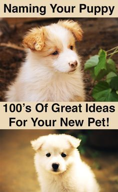 100s Of Great Dog Names The Best For Females And Males Whatever