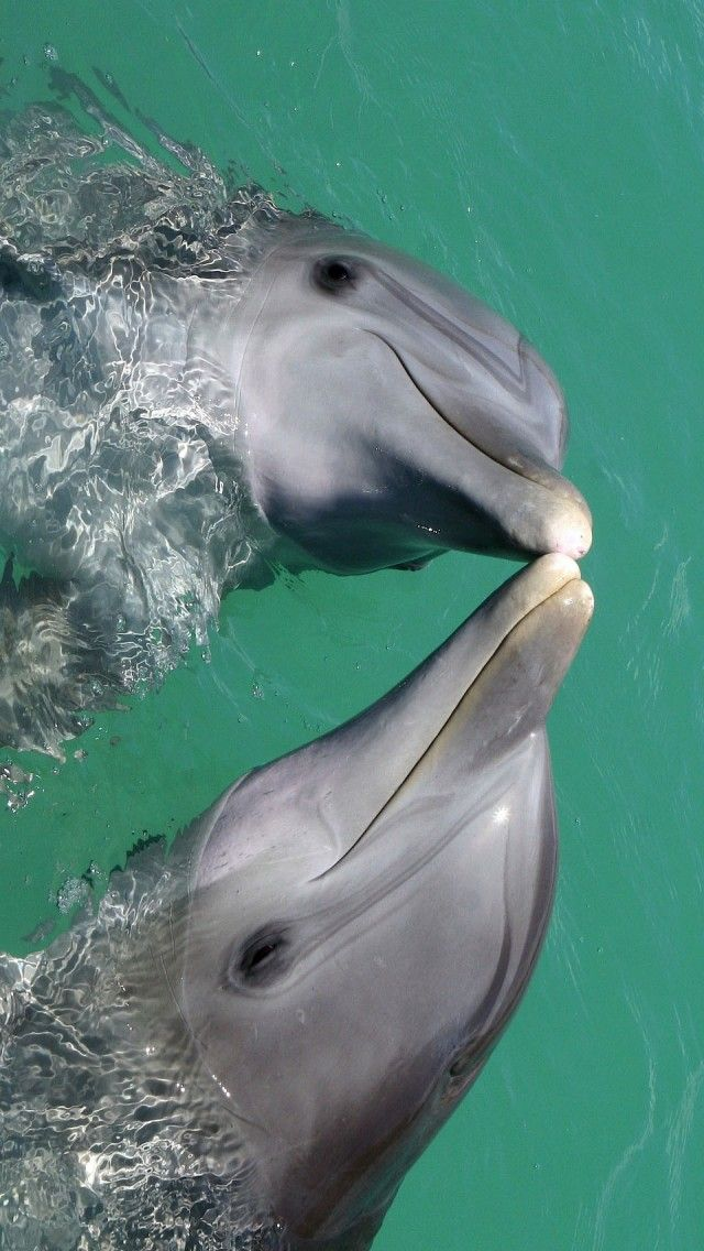 Kissing Dolphins:  Dolphin lovers will find joy with sterling silver dolphin jewelry.  http://www.silveranimals.com/dolphin_jewelry_charms.htm