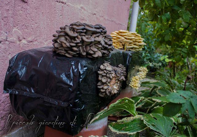 Il piccolo giardino di L.: Funghi fai da te: balle seminate da tenere in giar...