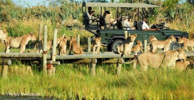 """It seems that every day and every drive offers something new and exciting at Chitabe in Botswana's Okavango Delta. The game viewing has simply been """"dazzling"""" so far this December!"""