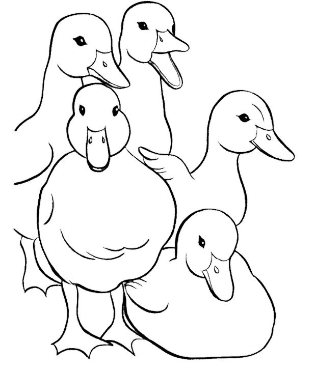 Family Duck Coloring Pages