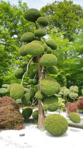 les 36 meilleures images du tableau arbre nuage sur pinterest jardins japonais buis et jardinage. Black Bedroom Furniture Sets. Home Design Ideas
