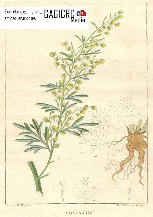 """ABSINTO """"Artemisia absinthum"""":  É um ótimo estimulante, em pequenas doses.  Ameniza a anemia e descarrega a bílis. Uma boa receita é fazer um chá com hortelã e canela.  Evitar na gravidez e na lactação, é emenagogo."""