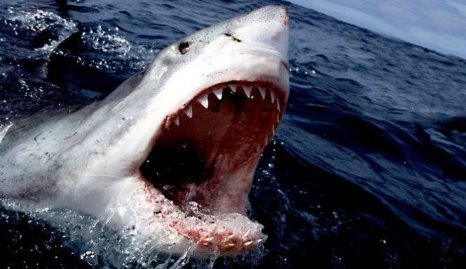 'Submarine': Is Discovery's Legendary Shark Getting ... |Legendary Sharks