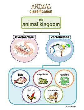 Here's a simple Animal Kingdom Classification Chart.