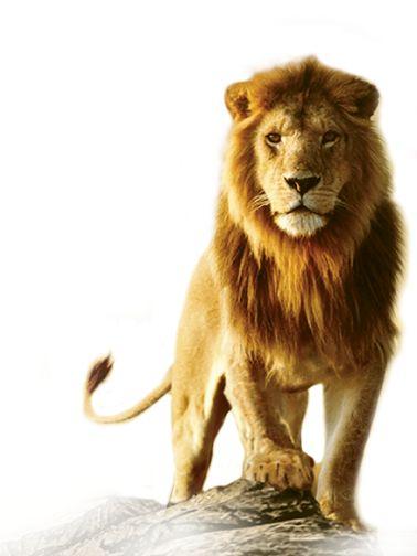 pin lion hd 3 - photo #21