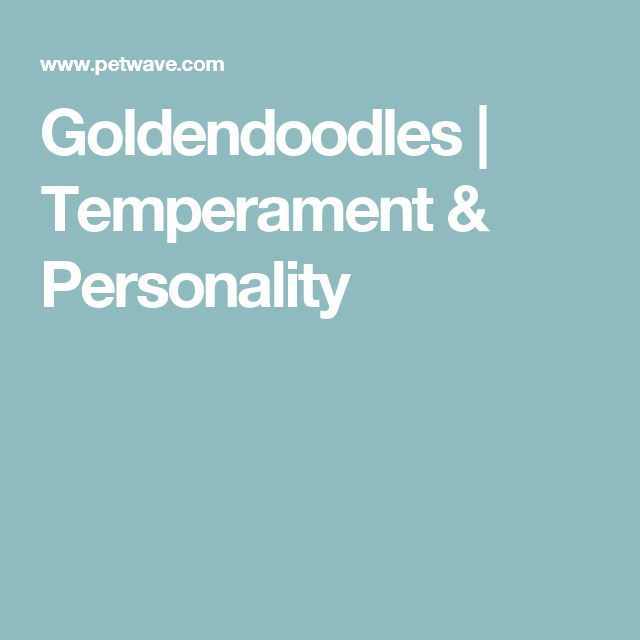 Goldendoodles   Temperament & Personality