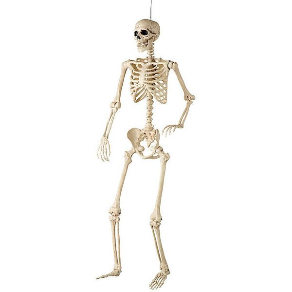 improvements 60 life size poseable skeleton halloween decoration 70 liked on polyvore - Halloween Skeleton