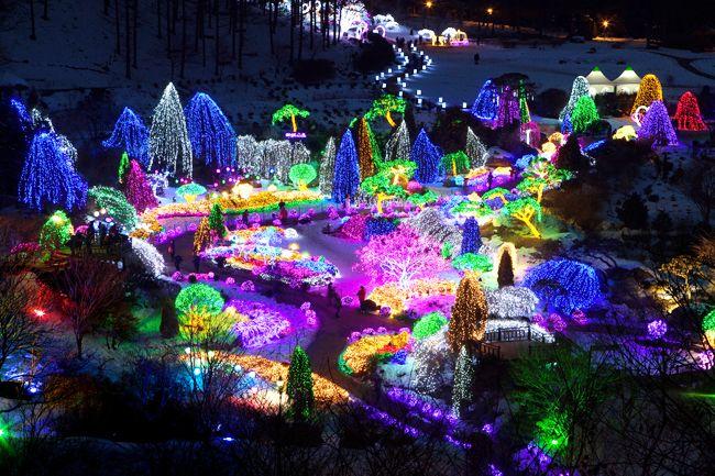Garden of Morning Calm, South Korea   ... Millions of light bulbs illuminate The Garden of Morning Calm at night