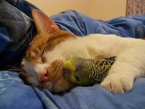 Cats And Parrot Getting Along