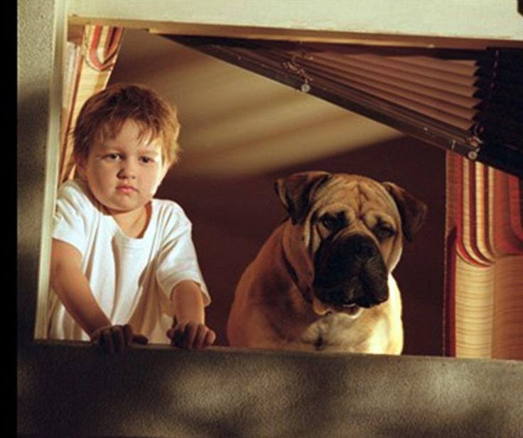 #ThrowbackThursday: See Spot Run - a 2001 Canadian-American comedy film that was shot in Vancouver, British Columbia, Canada is about a mailman who took in a stray Bullmastiff, only to learn that it is a trained FBI dog that has escaped from a witness protection program and is targeted for killing by a crime boss. #PetPoolWarehouse