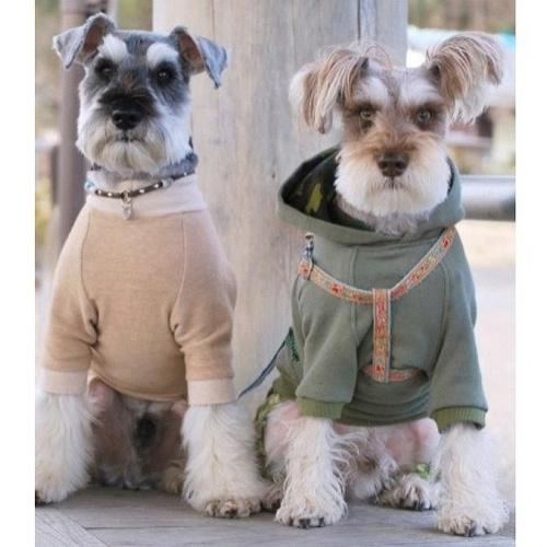 schnauzers in fancy dress schnauzersAnimal Lovers, Fancy Dresses, Animal Stuff, Schnauzers Pics, Dogs Rafting, Dogs Heavens, Future Pets, Adorable, Animal Photos