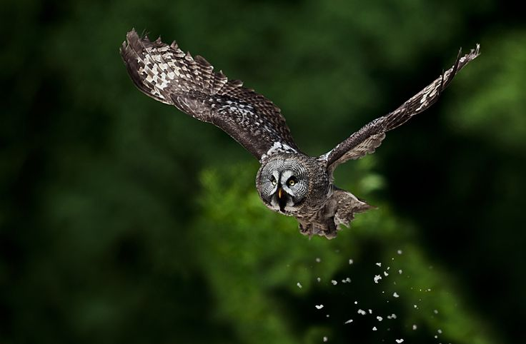 Owl by Gianluca Mariani Nature Photographer natura 2.8 on 500px