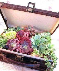 Succulent suitcase planterSuitcases Planters, Succulents Suitcases, Unusual Succulents, Travel Plants, Suitcas Planters, Unusual Planters, Succulent Planters, Old Suitcas, Vintage Suitcas