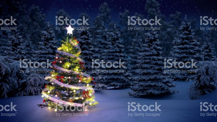 Christmas tree in woods royalty-free stock photo