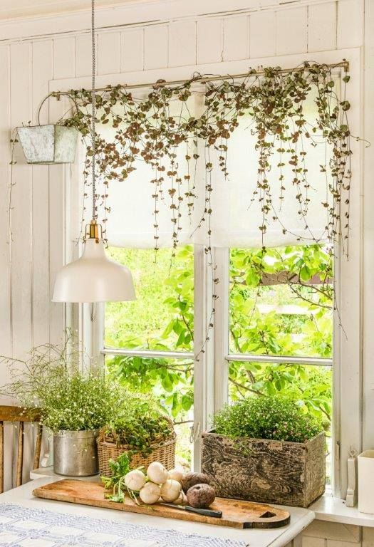 597 Best Images About Decorating W Houseplants On