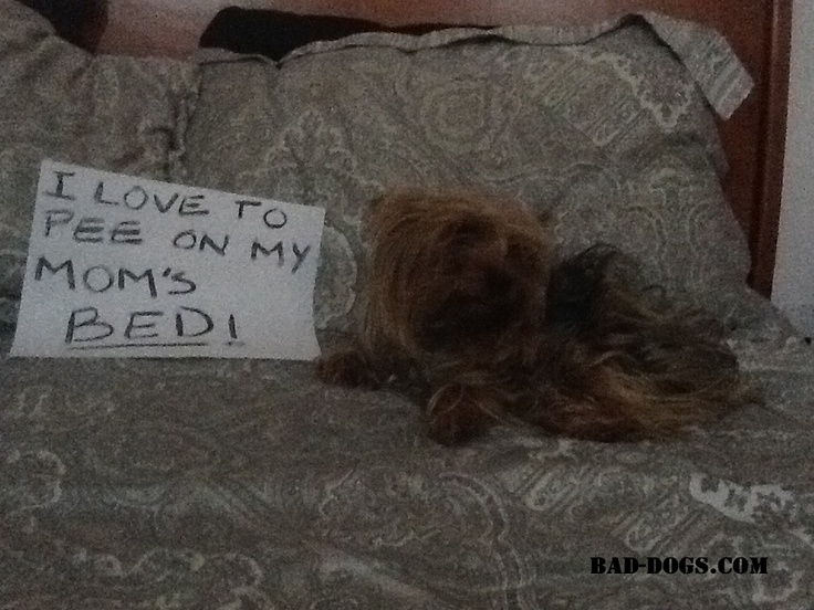 Pin by Bad Dogs on Dog Shaming Pinterest