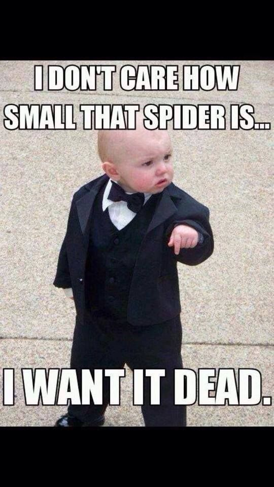 I don't care how small that spider is...I want it dead.
