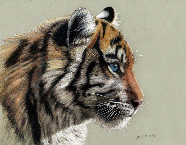 Colored Pencil Drawing of Tiger Cub by JasminaSusak on DeviantArt