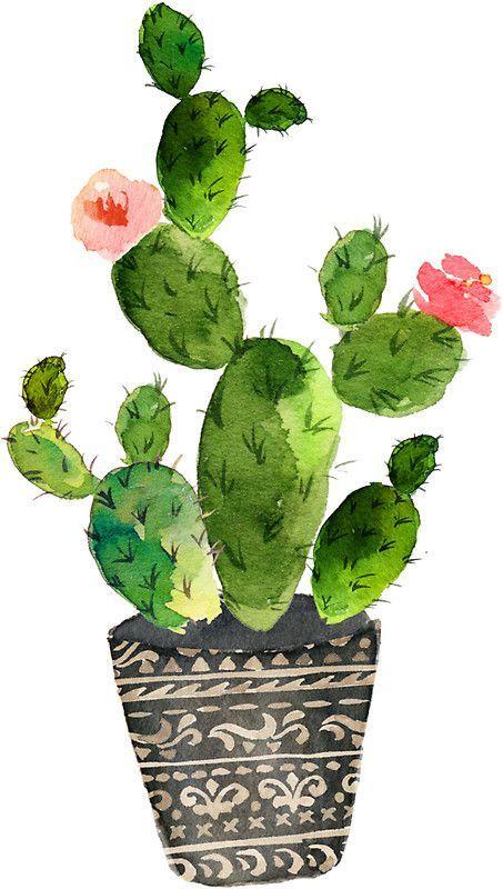 》Watercolor Cactus♡