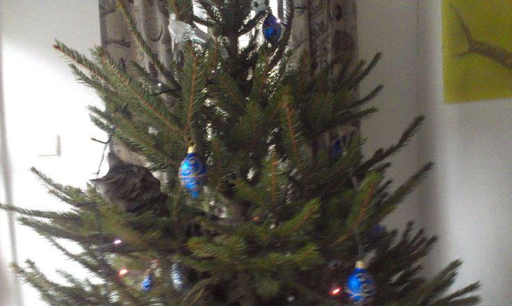 Muri 5 měsíců a vánoční stromek