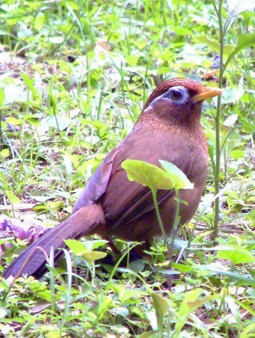 BIRDS BUTTERFLIES BLOOMS by Brenda Cregger Birds, Nature